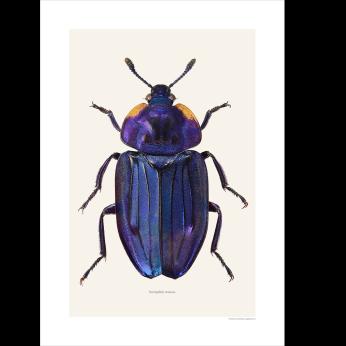 Metallic beetle prints
