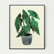 Begonia Unframed Art Print