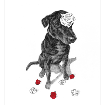 dogs + cats - Love Greeting Card