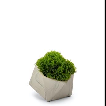 Baby Grass Succulent