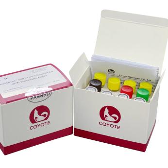 Detection Kit -PCR TESTS