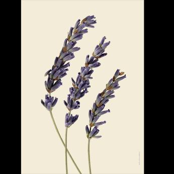 Dried botanical prints