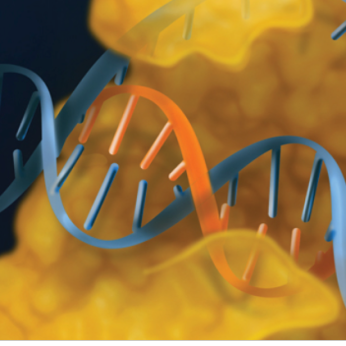 EnGen Products for Genome Editing