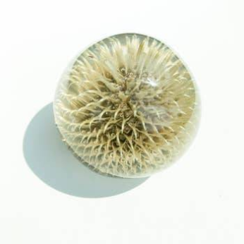 Botanical Sphere Thistle Paperweight
