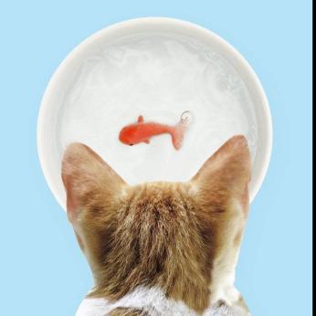 3D Goldfish Ceramic Pet Bowl