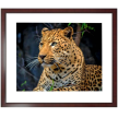 Spotted Leopard Upright