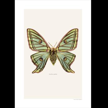 Butterfly art prints