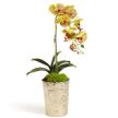 Single Orchid in Vintage Glass Vase