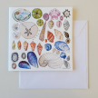 Seashells Greeting Cards