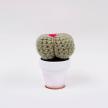 Cactus 2 (S)